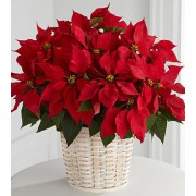 The FTD® Red Poinsettia Basket