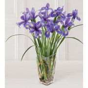 The FTD® Blooming Iris Bouquet