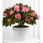 The FTD® Vibrant Sympathy™ Planter